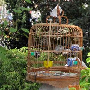 Hua mei bird park vogelkooi