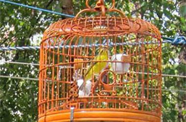 Hua Mei Bird Garden